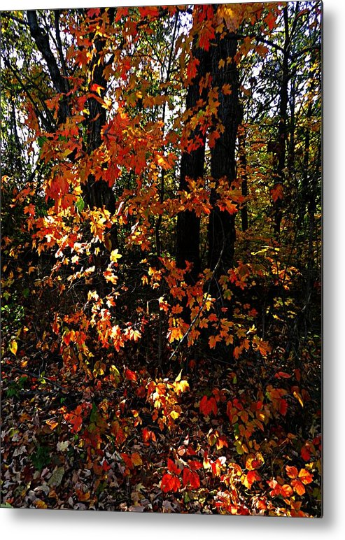 Autumn Scenes Metal Print featuring the photograph A Slash Of Sunlight by Julie Dant