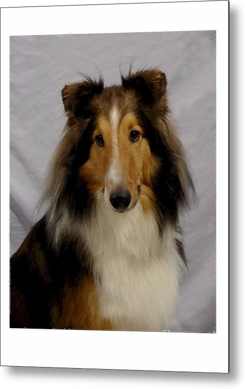 Collie Metal Print featuring the digital art Collie 111 by Larry Matthews