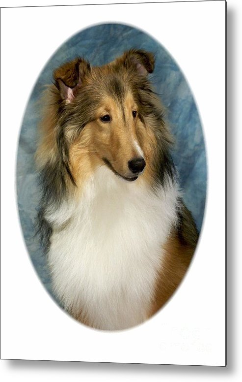 Collie Metal Print featuring the digital art Collie 821 by Larry Matthews
