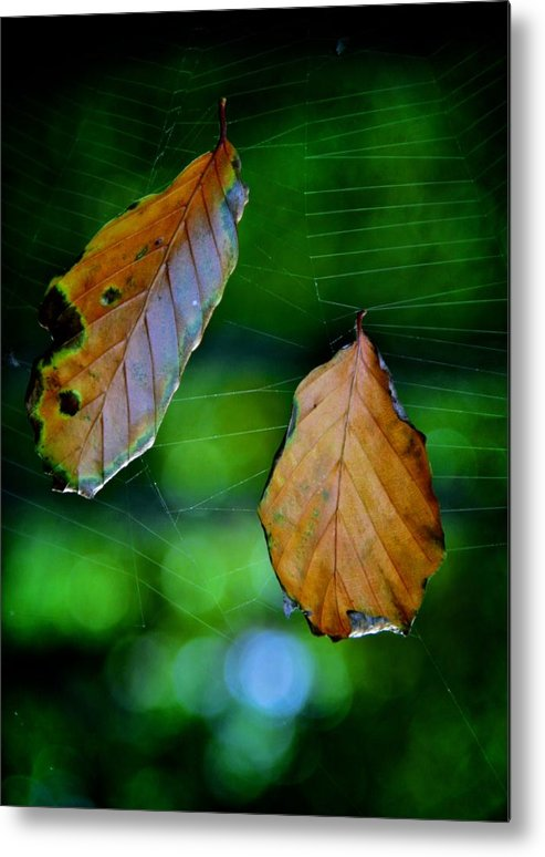 Leaves Metal Print featuring the photograph Estranged by Odd Jeppesen