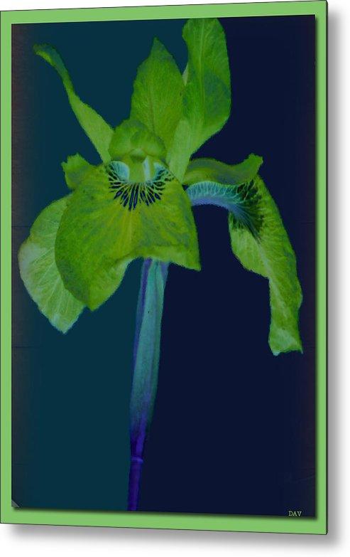Iris Flower Design Metal Print featuring the photograph Iris Flower Design by Debra   Vatalaro