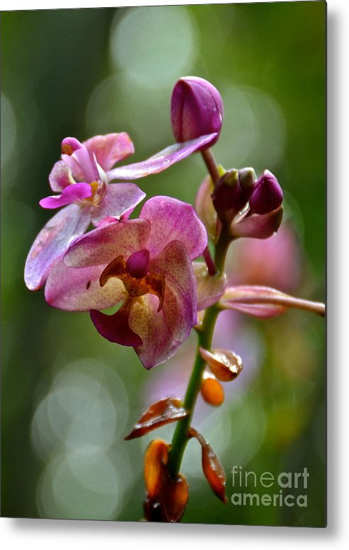Orchid Metal Print featuring the photograph Orchid by Carol Bradley