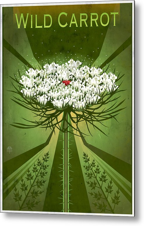 wildflower Art Metal Print featuring the painting Queen Anne's Lace Print by Garth Glazier