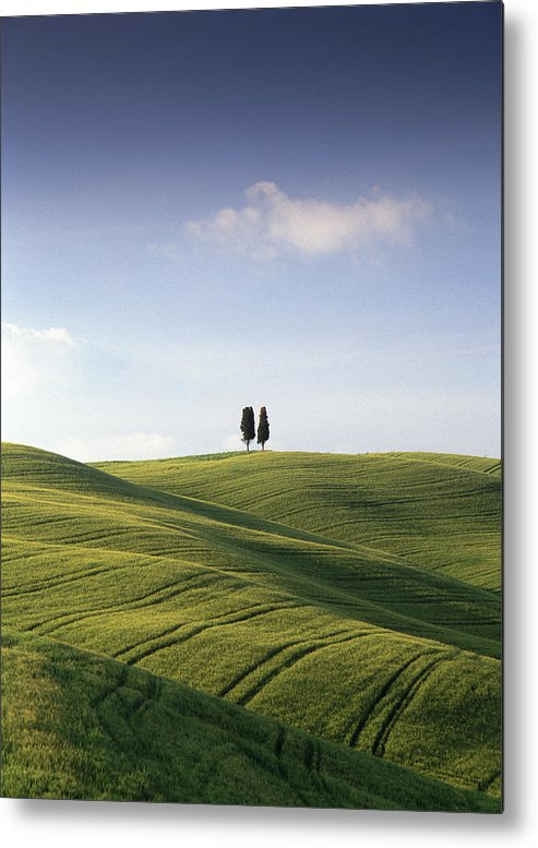 Photograph Metal Print featuring the photograph Twin Cypresses by Michael Hudson