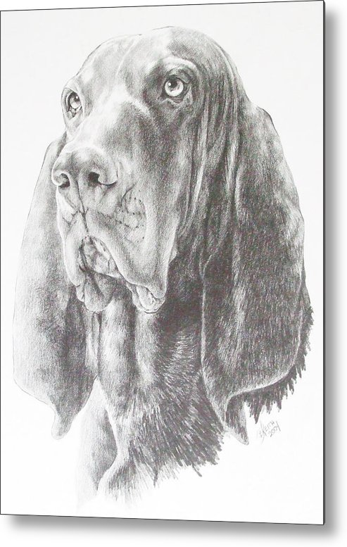 Purebred Dogs Metal Print featuring the drawing Black And Tan Coonhound by Barbara Keith