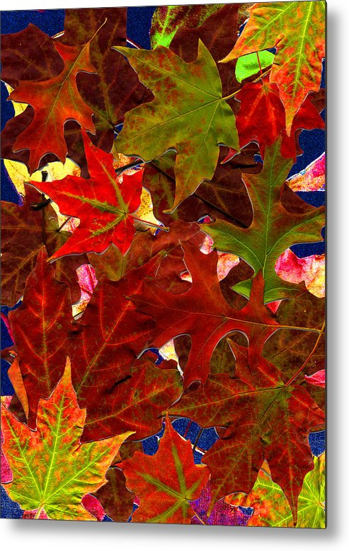 Collage Metal Print featuring the photograph Autumn Leaves by Nancy Mueller