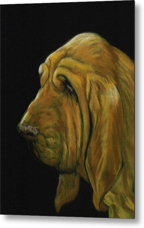 Bloodhound Metal Print featuring the painting Bloodhound by Charlotte Yealey