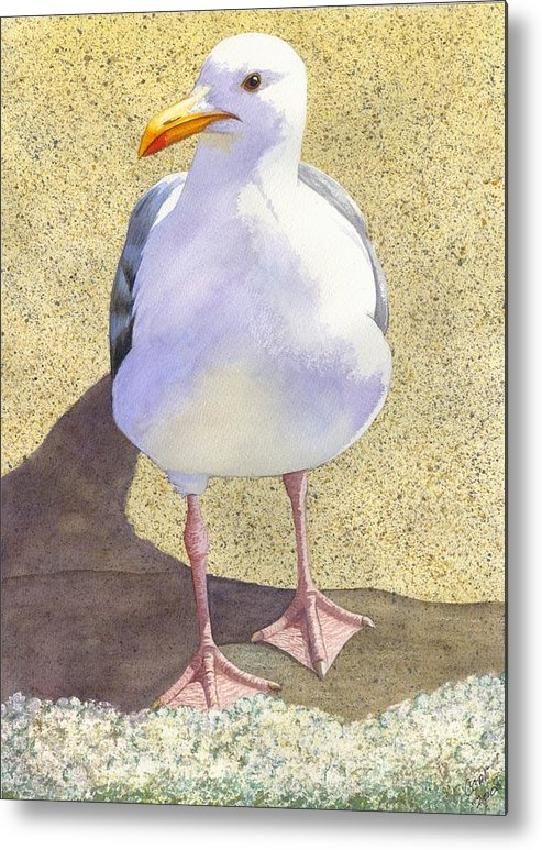 Seagull Metal Print featuring the painting Chilly by Catherine G McElroy