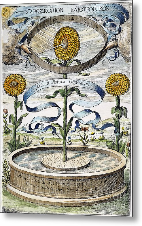 1643 Metal Print featuring the photograph Flower Clock, 1643 by Granger