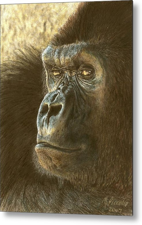 Gorilla Metal Print featuring the drawing Gorilla by Marlene Piccolin