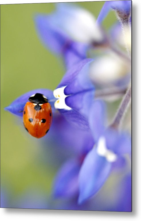 Flower Metal Print featuring the photograph Hanging On A Petal by Danielle Miller