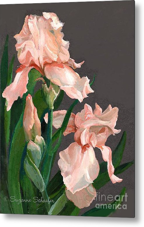 Flowers Metal Print featuring the painting Iris Study by Suzanne Schaefer