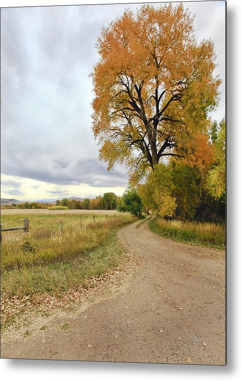 Trees. Fallcolors .big. Tree. Dirt. Road. Long. Road. Yellow. Grass. Cloudy. Storm. Green. Blue. Aspin. Yellow. Aspin Tree Phbgotography. Mixed Media. Mixed Media Photography. Colorado Fall Colors. Mixed Media Fall Colors. Fall Color Greeting Cards. Fort Collins Colorado Fall Colors. Colorado Greeting Cards.  Metal Print featuring the photograph Road To Dads Place by James Steele