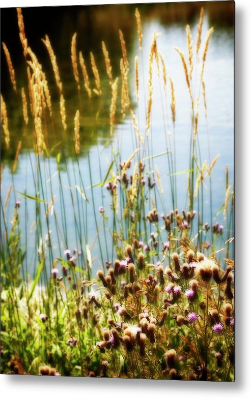 Soft Metal Print featuring the photograph Soft And Surreal by Marilyn Hunt