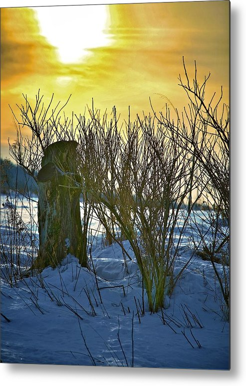 Sun Shine Nature Metal Print featuring the photograph The Rabbit Trail by Robert Pearson