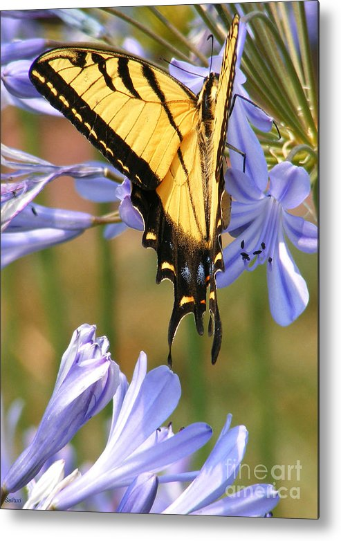 Butterfly Metal Print featuring the photograph Touching Lilly by Gail Salitui