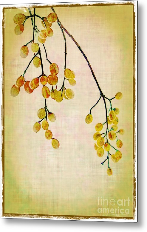 Yellow Metal Print featuring the photograph Yellow Berries by Judi Bagwell
