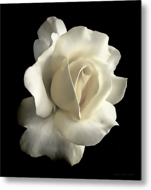 Rose Metal Print featuring the photograph Grandeur Ivory Rose Flower by Jennie Marie Schell