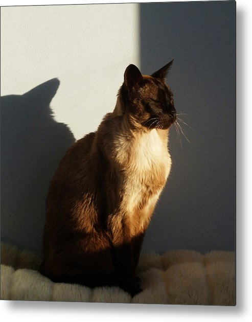 Tonkinese Metal Print featuring the photograph Tonkinese Sunlit Nap by Margaret Saheed