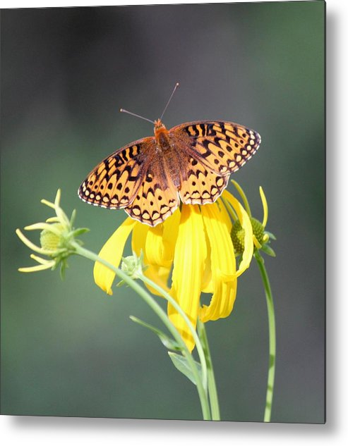 Butterfly Metal Print featuring the photograph Migrating Butterfly Ser3 by Amara Roberts