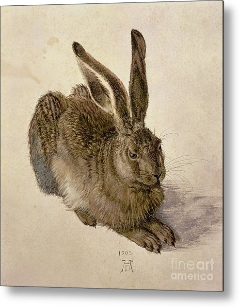 Hare Metal Print featuring the painting Hare by Albrecht Durer