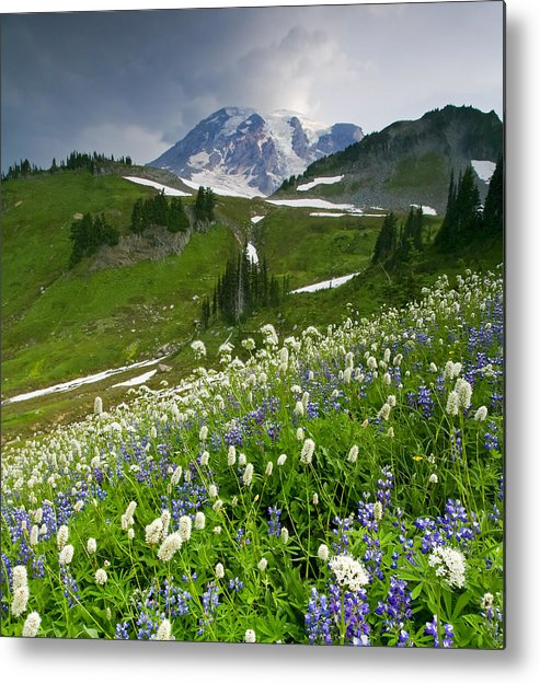 Rainier Metal Print featuring the photograph Lupine Storm by Mike Dawson