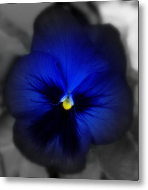 Pansey Metal Print featuring the photograph Pansey In Blue by Jacqueline Russell