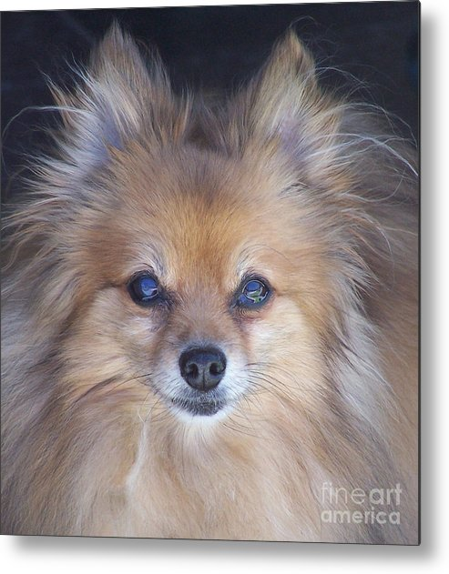 Dog Metal Print featuring the photograph Zoom by Brian Commerford