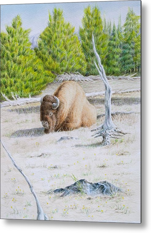 Buffalo Metal Print featuring the painting A Buffalo Sits In Yellowstone by Michele Myers