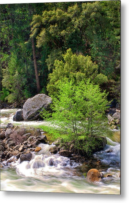 Yosemite Metal Print featuring the photograph Alder Trees In White Water by Floyd Hopper