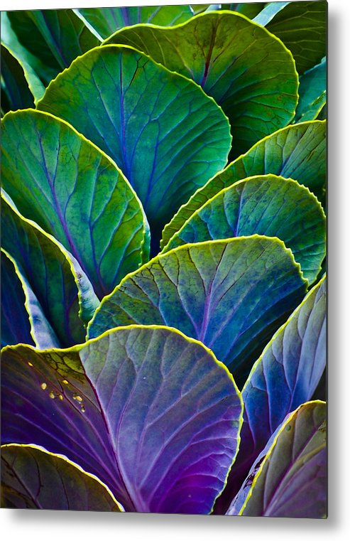 Organic Metal Print featuring the photograph Colors Of The Cabbage Patch by Christi Kraft