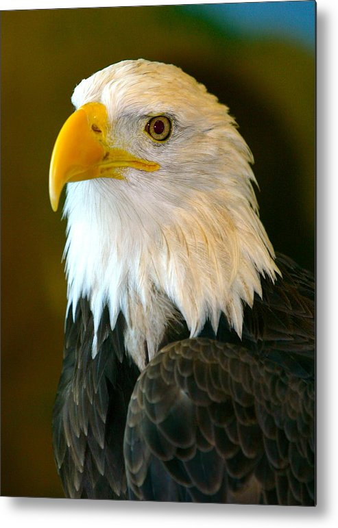 Eagle Metal Print featuring the photograph Eagle 3 by Reno Massimino