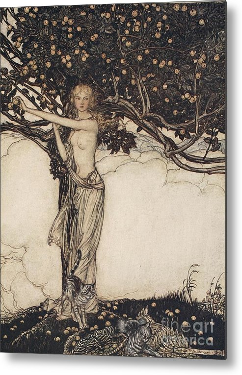 Der Ring Des Nibelungen; The Ring Of The Nibelung; Myth; Legend; Opera; The Ring Cycle; Das Rheingold; Richard Wagner; Viking; Norse Mythology; Female; Goddess; Keeper; Apples; Fruit; Tree; Cat; Cats; Basket; Fruit Picking; Fantasy; Freya; Nude Metal Print featuring the drawing Freia The Fair One Illustration From The Rhinegold And The Valkyrie by Arthur Rackham