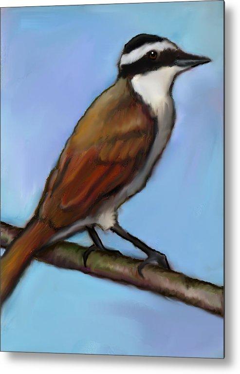 Bird Metal Print featuring the drawing Great Kiskadee Bird by Joyce Geleynse