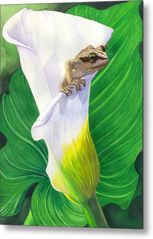 Frog Metal Print featuring the painting Lily Dipping by Catherine G McElroy