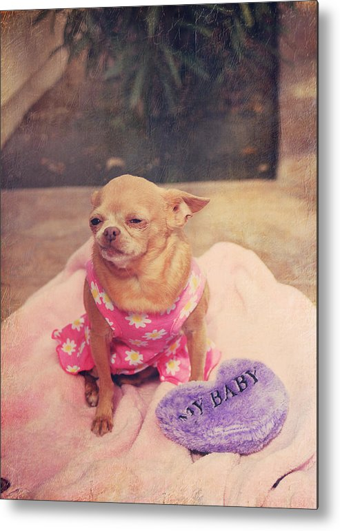 Dogs Metal Print featuring the photograph My Baby by Laurie Search