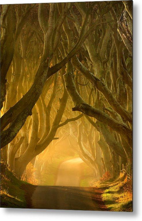 Antrim Metal Print featuring the photograph The Dark Hedges IIi by Pawel Klarecki