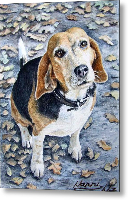 Dog Metal Print featuring the painting Beagle Nanni by Nicole Zeug