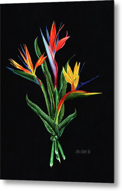 Bird Of Paradise Metal Print featuring the painting Bird Of Paradise In Black by Peter Piatt