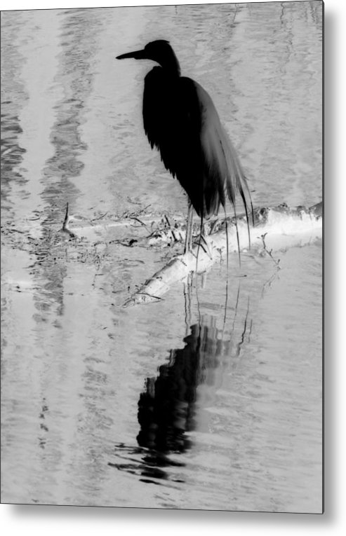 Bird Metal Print featuring the photograph Black On White Bird by Laura Holt