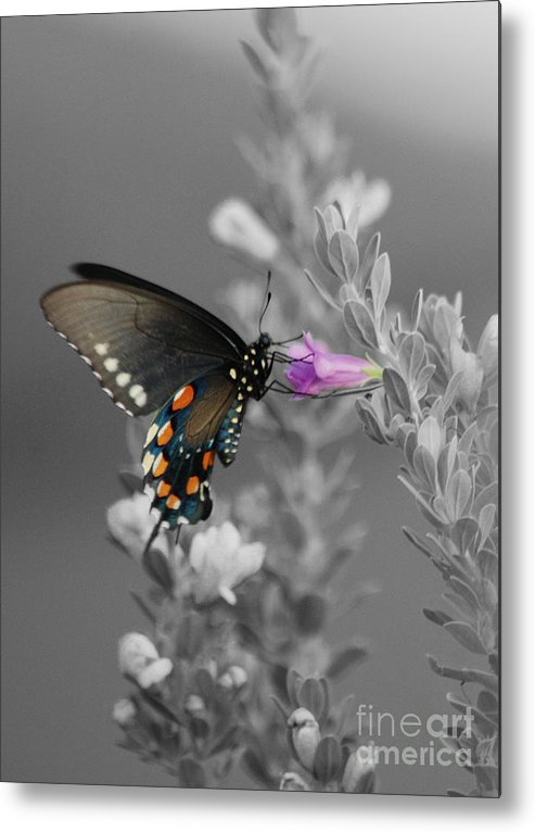 Butterfly Metal Print featuring the photograph Butterfly And Flower by Jim Wright