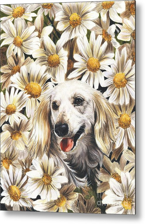 Dachshund Metal Print featuring the drawing Camoflaged by Barbara Keith