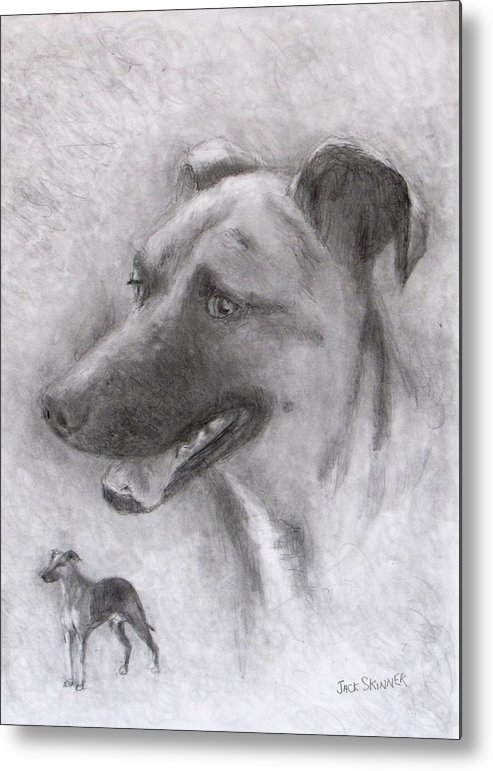 Dog Metal Print featuring the drawing Eliot by Jack Skinner