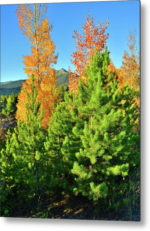 Colorado Metal Print featuring the photograph Fall Comes To Dillon Colorado by Ray Mathis