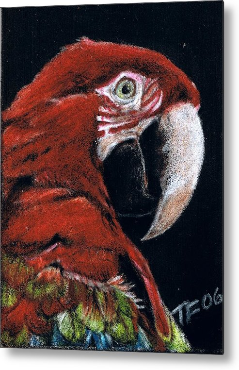 Parrot Metal Print featuring the drawing Jake by Terri Kilpatrick