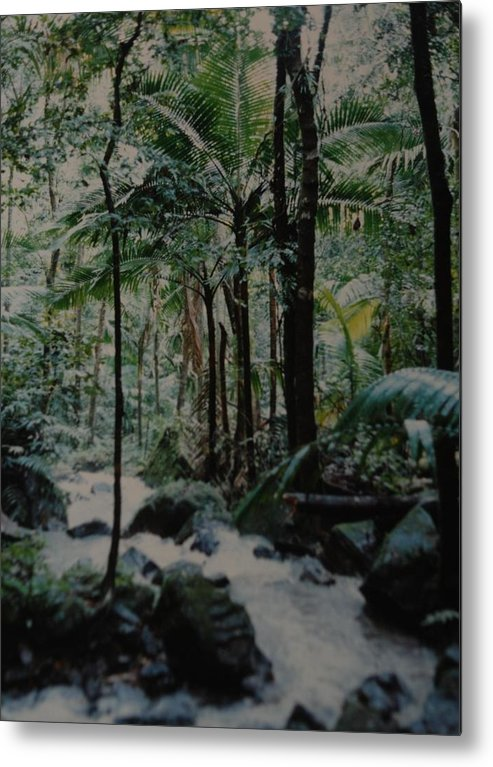 Trees Metal Print featuring the photograph Puerto Rico by Rob Hans