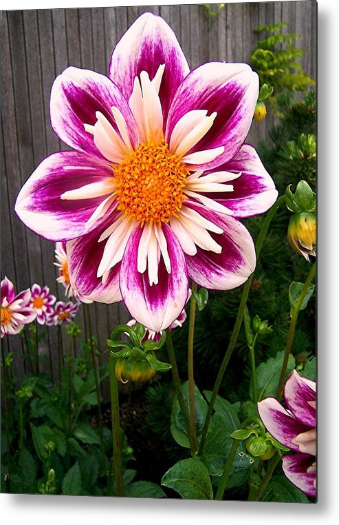 Flower Metal Print featuring the photograph Special Flower by Caroline Urbania Naeem