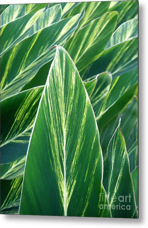 Nature Metal Print featuring the photograph Striated Greens by Lucyna A M Green