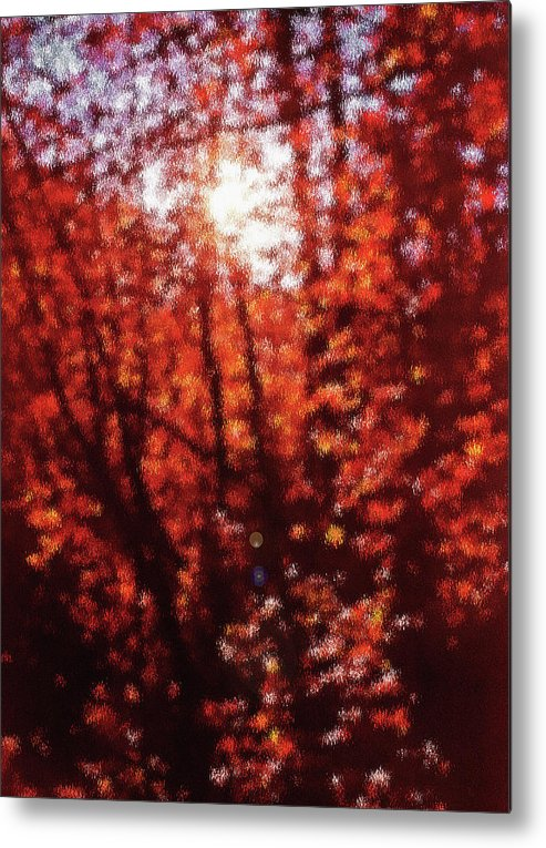 Fall Metal Print featuring the photograph Sunlight Thru Autumn Leaves Abstract by Steve Ohlsen