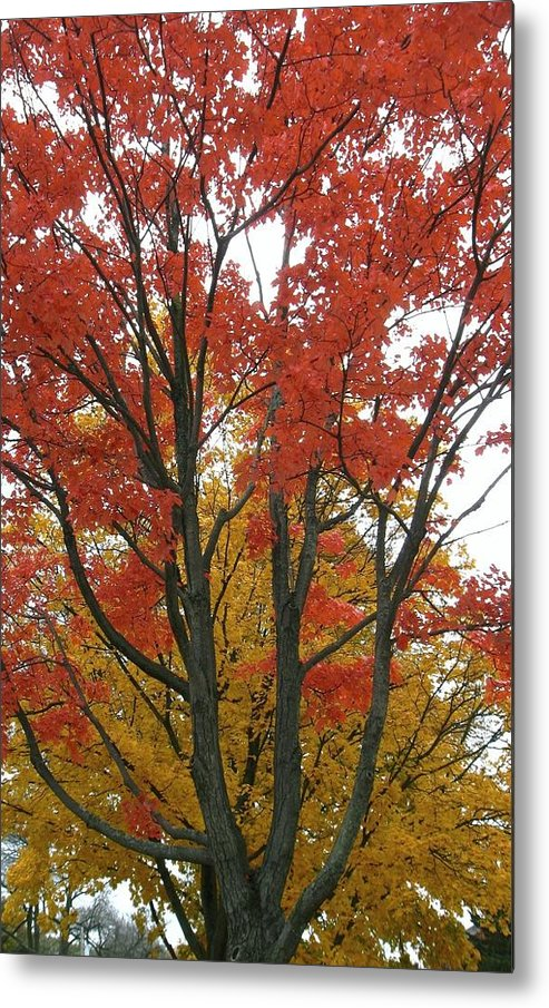 Autumn Trees Metal Print featuring the photograph Autumn Duel by Todd Sherlock
